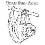 Sloth coloring