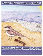 Snowy Plover coloring