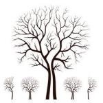 Split Tree clipart