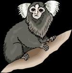 Squirrel Monkey clipart