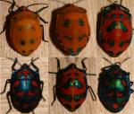 Stink Bug coloring