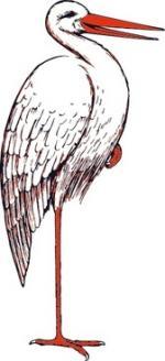 Stork svg