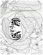 Sumatran Tiger svg