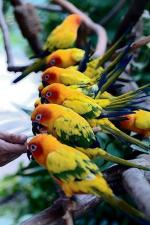 Sun Parakeet svg