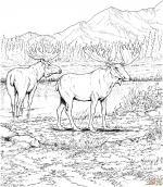 Swedish Moose coloring