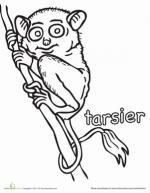 Tarsier coloring