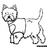 West Highland White Terrier coloring