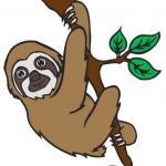 Three Toed Sloth clipart