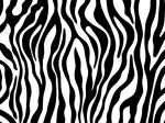 Tiger Print coloring