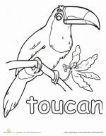 Toco Toucan coloring