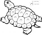 Turtoise coloring