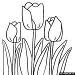 Tulip coloring
