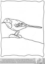 Wagtail clipart