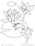 Water Lily coloring