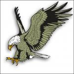 Wedge Tailed Eagle clipart