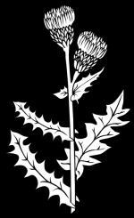 Weeds clipart