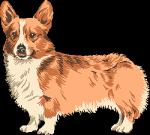 Welsh Terrier clipart