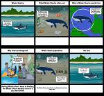 Whale Shark svg