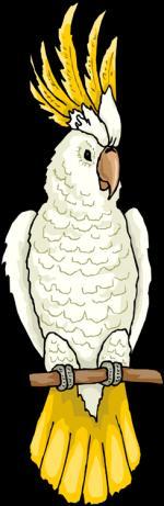 White Cockatoo clipart