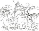 Wildlife coloring