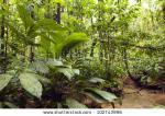 Yasuni National Park clipart