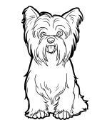 Yrokshire Terrier coloring