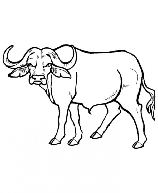 preview Water Buffalo coloring