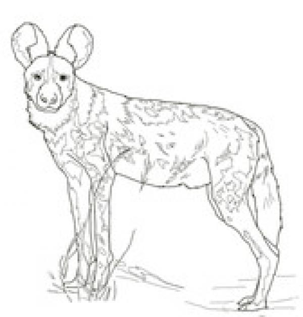 preview African Wild Dog coloring
