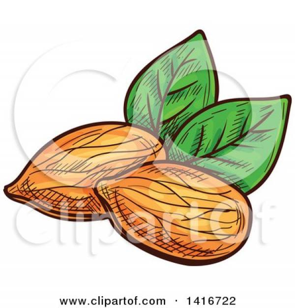 Almond clipart