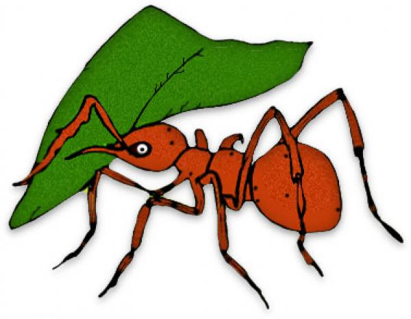 Ants clipart