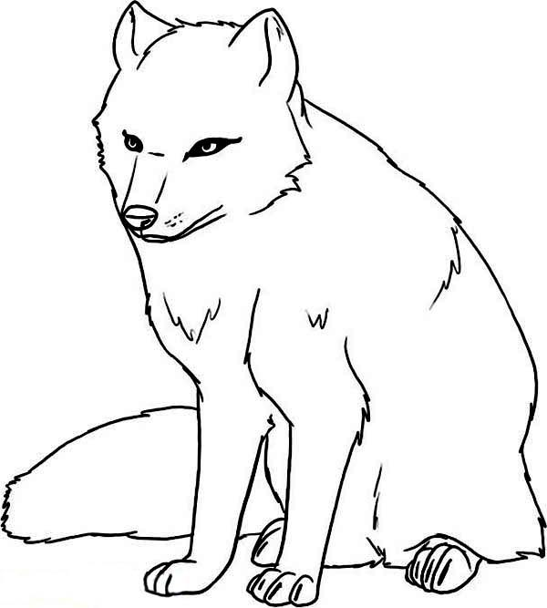 Arctic Wolf coloring