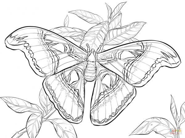 Atlas Beetle coloring