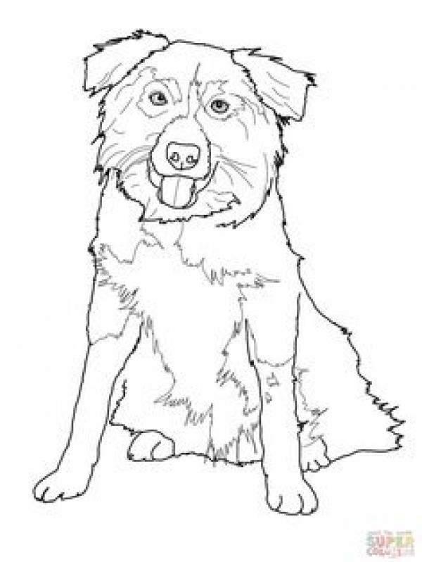 Bearded Collie coloring