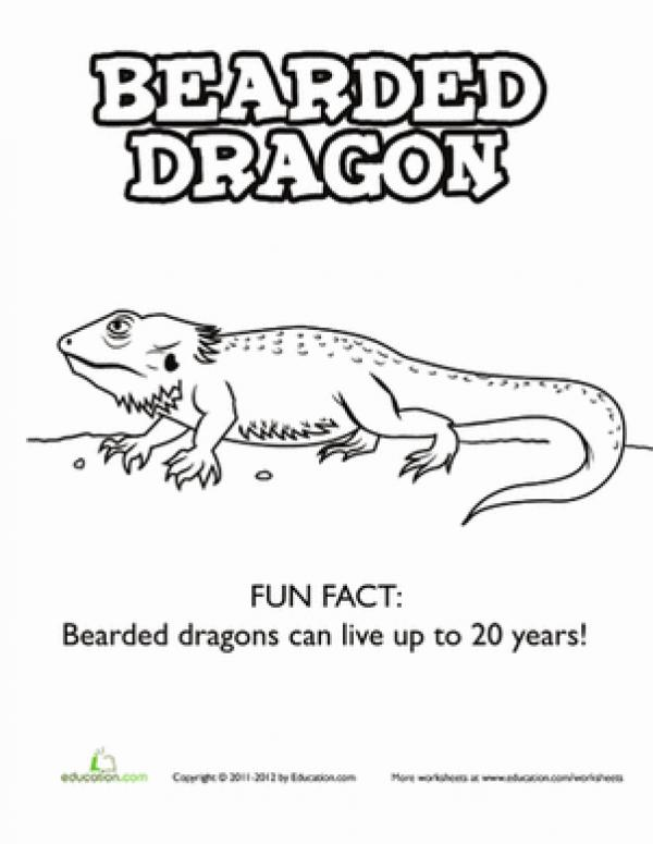 Bearded Dragon coloring