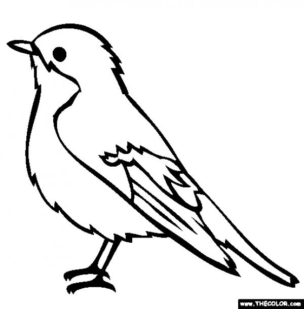Black-masked Blackbird coloring