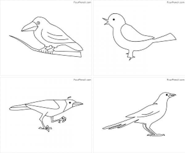 Blackbird coloring