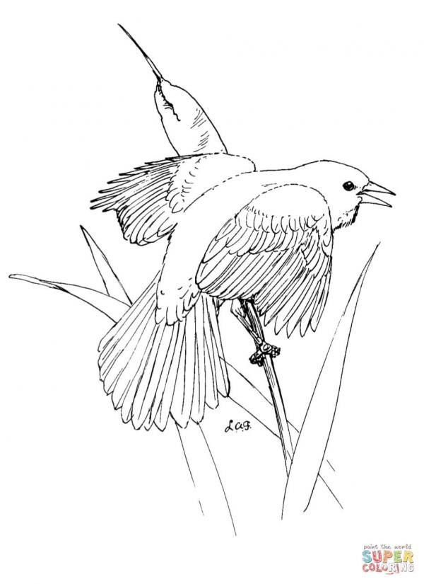preview Waxwing coloring
