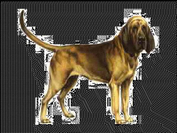 Bloodhound clipart
