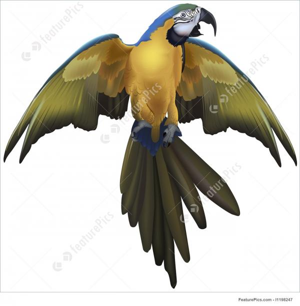 Blue-and-yellow Macaw clipart