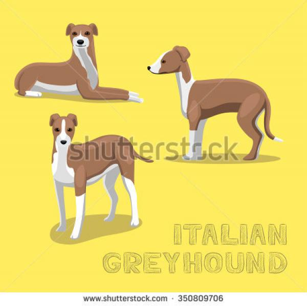preview Bracco Italiano clipart