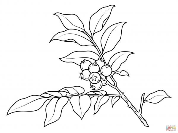 Branch coloring