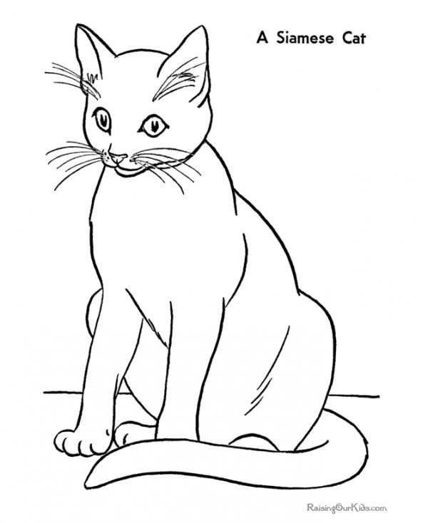 preview Siamese Cat coloring