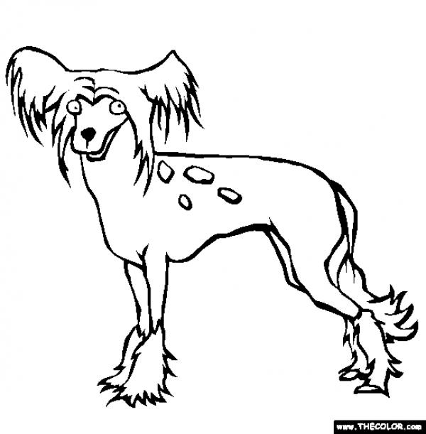 preview Chinese Crested Dog coloring