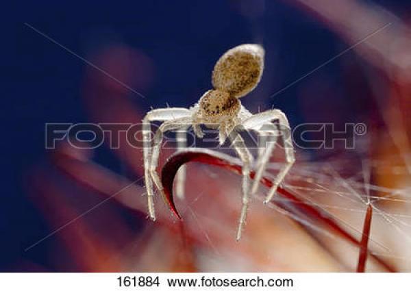 Crab Spider clipart