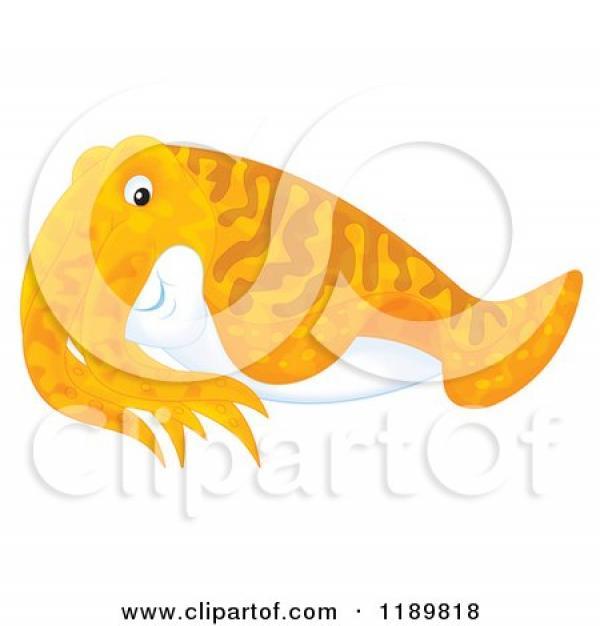 Cuttlefish clipart