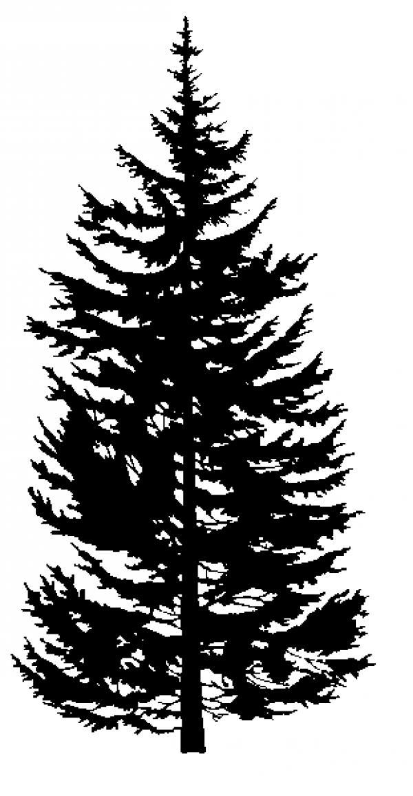 Douglas Fir Trees clipart