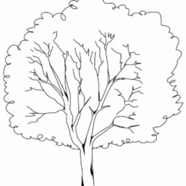 Elm Tree coloring