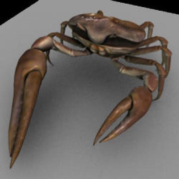 Fiddler Crab svg