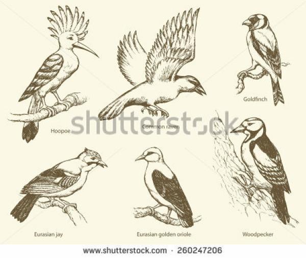Goldfinch svg