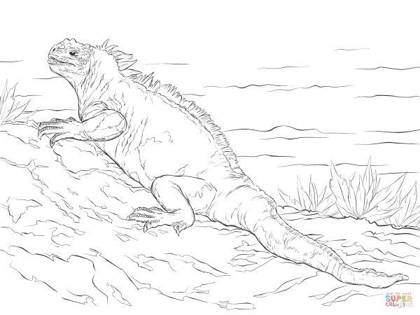 Iguana coloring
